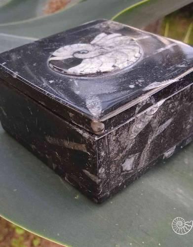 Ammonite box